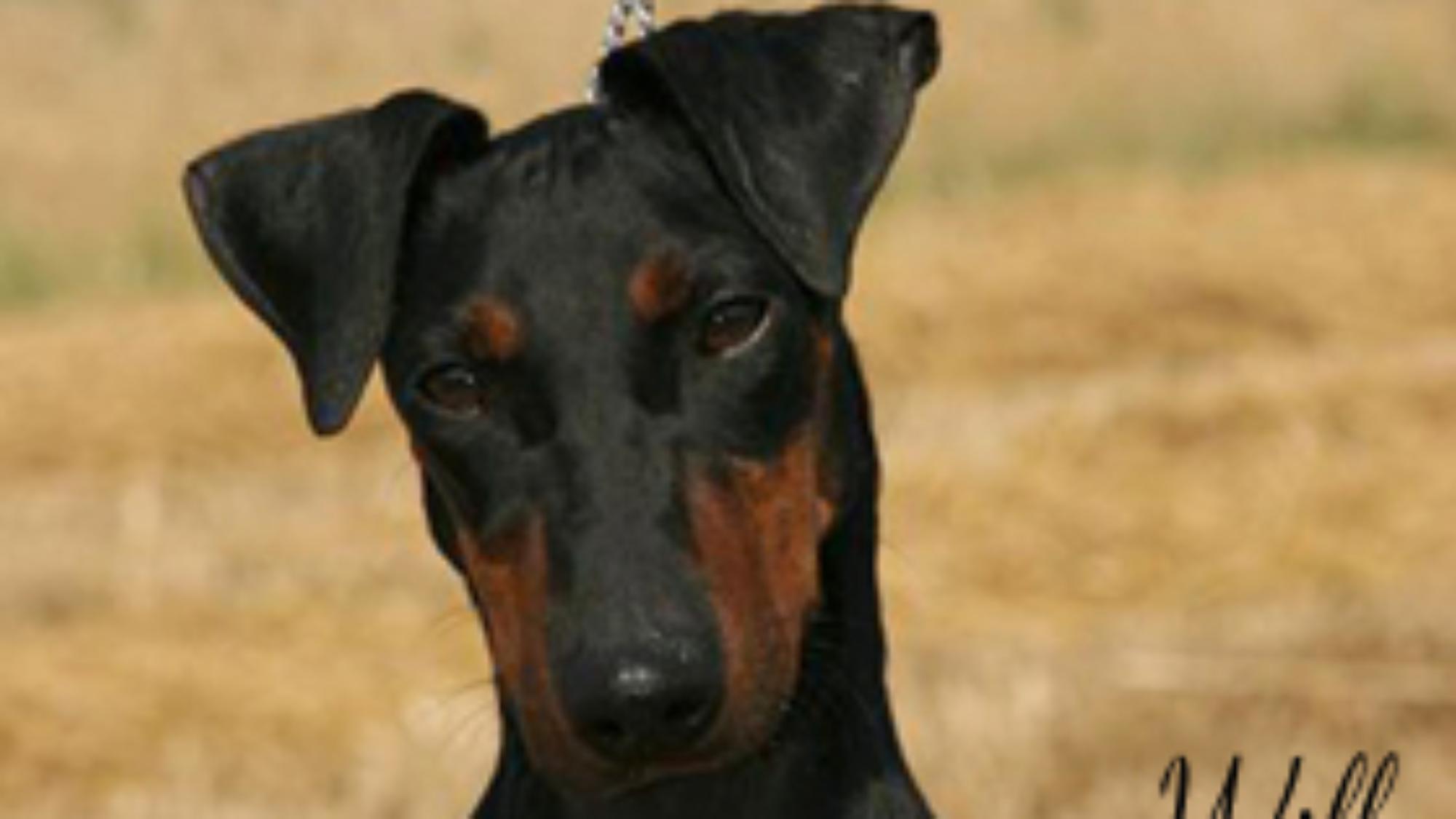 EddieLawson_dogs